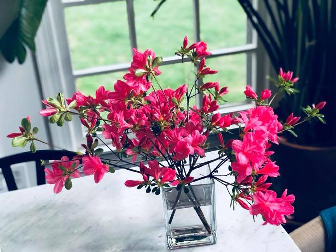 Chị chia sẻ điều chị thích nhất khi có một khu vườn trồng hoa là cắt những nhánh hoa mới nở để cúng bàn thờ Phật hay trang trí bàn ăn trong nhà.