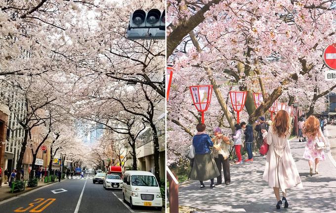 12 hình ảnh chứng minh Nhật Bản đến từ hành tinh khác - ảnh 12