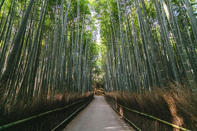 Rừng trúc ở Arashiyama, phía TâyKyoto. Con đường rợp bóng trúc xanh mướt và cao tít đã thường xuyên xuất hiện trong các bài quảng bá du lịch của cố đô Kyoto.