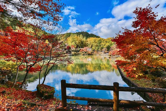 Ngôi làng Hida Folk Village ở thành phố Takayama - miền Trung Nhật Bản. Vào mùa thay lá, các khu rừng đồng loạt đổi màu từ xanh sang vàng và đỏ tươi.