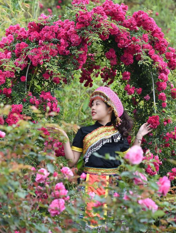 Ngắm hoa hồng nở rộ tại Sun World Fansipan vào kỳ nghỉ hè - ảnh 4