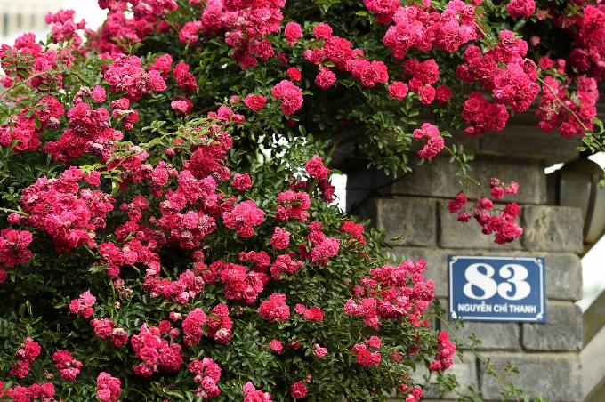 Ngắm hoa hồng nở rộ tại Sun World Fansipan vào kỳ nghỉ hè - ảnh 2