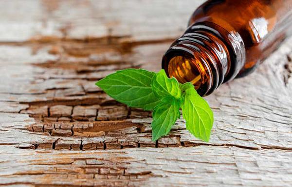 Công thức dầu ô liu và bạc hà Trộn 1/4 cốc dầu ô liu với 1 cốc đường nâu và 15 giọt tinh dầu bạc hà. Dùng hỗn hợp massage đều lên da đến khi đường tan ra thì tắm sạch lại. Nên sử dụng hỗn hợp từ 2 - 3 lần mỗi tuần để làm mềmda.