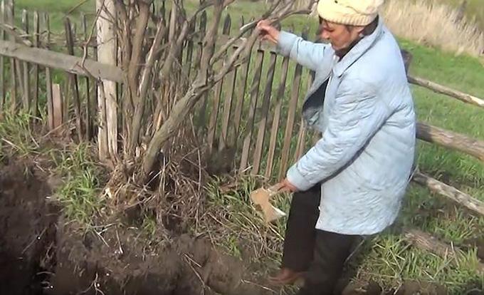 Đào đất trồng khoai, phát hiện bộ xương chồng cũ của vợ - ảnh 2
