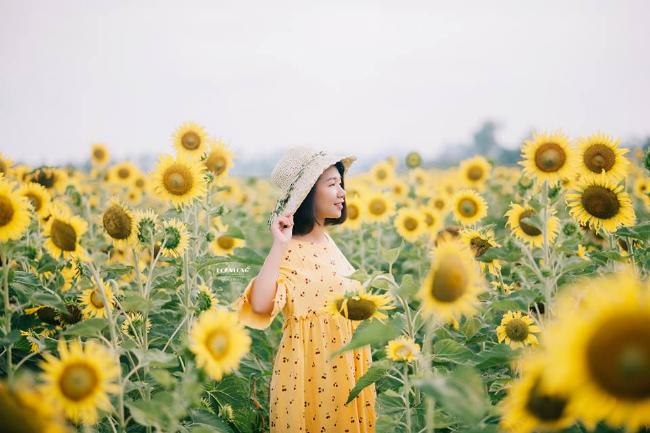 Tuy chưa được  mở cửa chính thức nhưng cánh đồng hoa này đã đón hàng trăm lượt khách mỗi ngày. Ảnh: Doan Long Photography