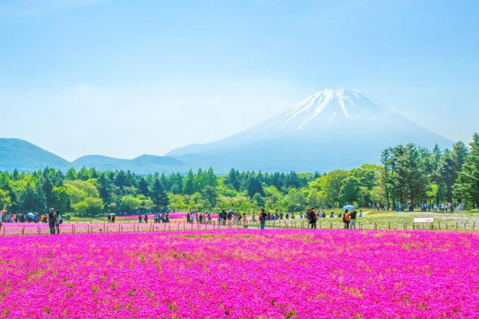 6 điểm chụp ảnh núi Phú Sĩ giống hệt postcard - ảnh 4