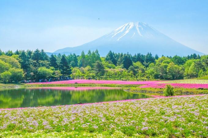 6 điểm chụp ảnh núi Phú Sĩ giống hệt postcard - ảnh 3