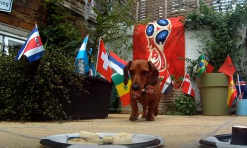 Chó tiên tri dự đoán World Cup sai nhiều hơn đúng
