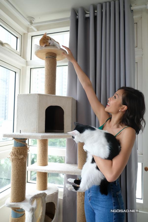 Phuong Mai nuoi 7 con meo trong can chung cu di thue