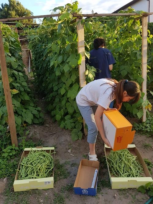 Đại gia đình 14 người Việt tại CH Czech không ăn hết rau trong khu vườn tự trồng - ảnh 4