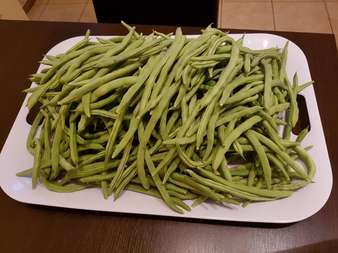 Đại gia đình 14 người Việt tại CH Czech không ăn hết rau trong khu vườn tự trồng - ảnh 5