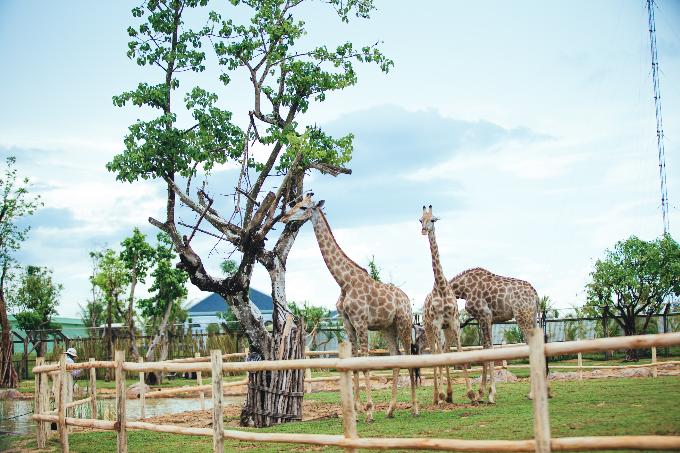 Công viên bảo tồn động vật hoang dã trên sông tại Quảng Nam - ảnh 5