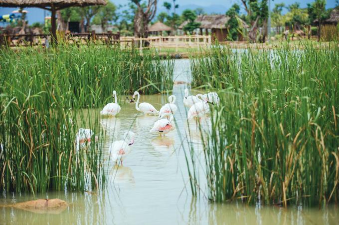 Công viên bảo tồn động vật hoang dã trên sông tại Quảng Nam - ảnh 4