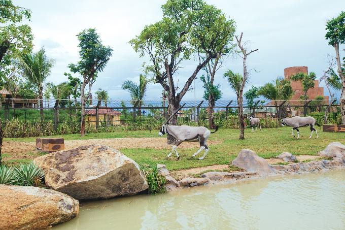 Công viên bảo tồn động vật hoang dã trên sông tại Quảng Nam - ảnh 1