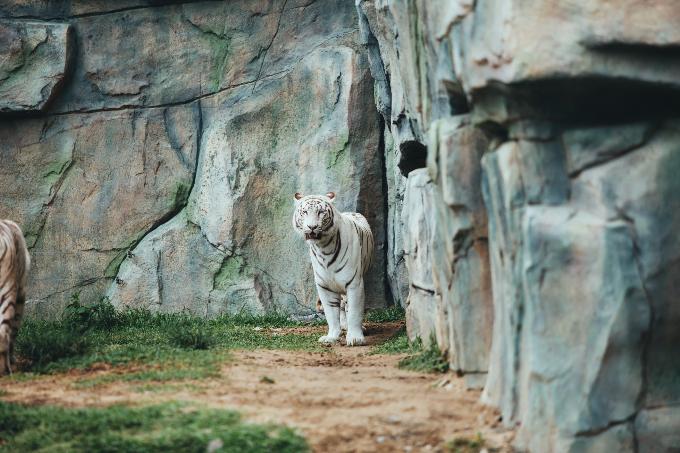 Công viên bảo tồn động vật hoang dã trên sông tại Quảng Nam - ảnh 9