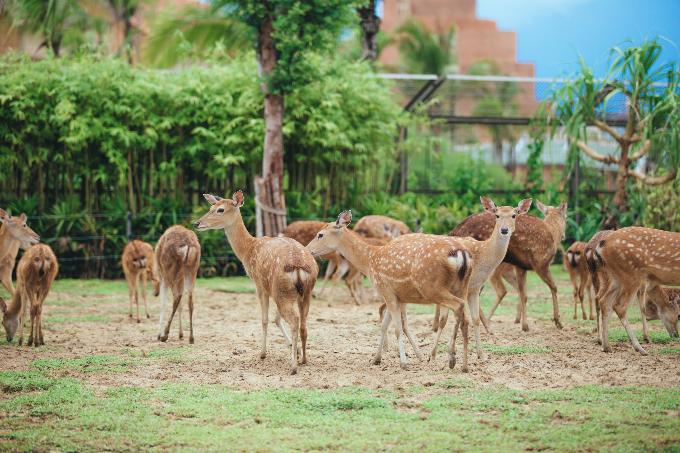 Công viên bảo tồn động vật hoang dã trên sông tại Quảng Nam - ảnh 8