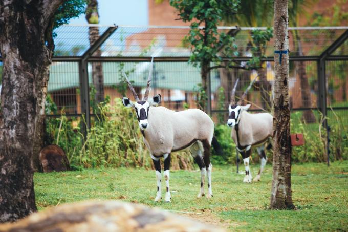 Công viên bảo tồn động vật hoang dã trên sông tại Quảng Nam - ảnh 7