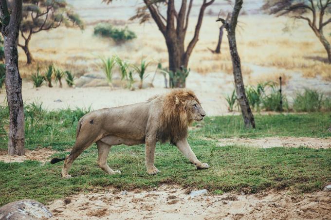 Công viên bảo tồn động vật hoang dã trên sông tại Quảng Nam - ảnh 2