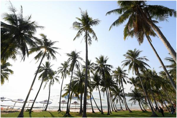 Du khách cũng có cơ hội nằm dưới hàng dừa nghiêng bóng tại bãi Trào xanh màu cỏ.