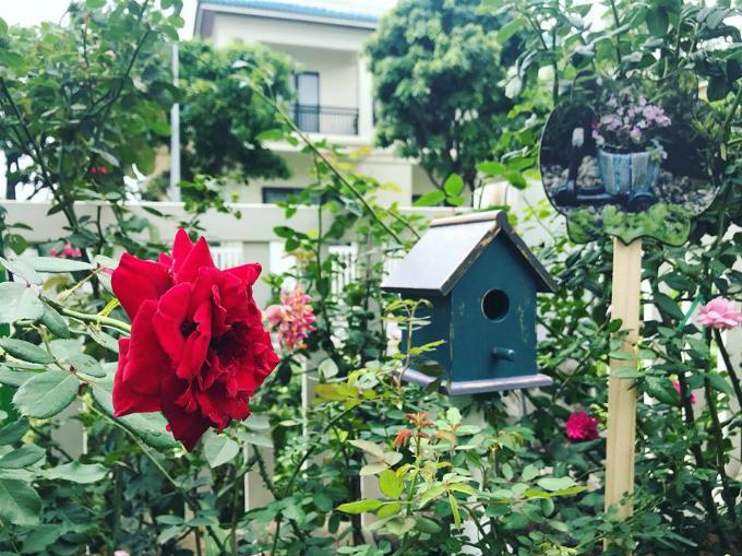 Những tổ chim bằng gỗ đặt xen kẽ giữa các khóm hoa.