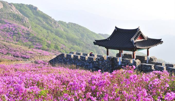 Về thăm quê hương HLV Park Hang Seo - 1