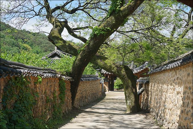 Về thăm quê hương HLV Park Hang Seo - 6