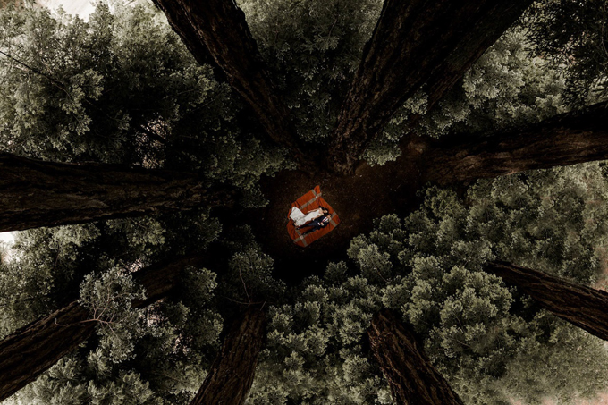 Ảnh được chụp với bố cục đường chéo giao nhau. Tấm hình được thực hiệnở giữa khu rừng Glen Oaks Big Sur, California, Mỹ bởi Elisabetta Redaelli.