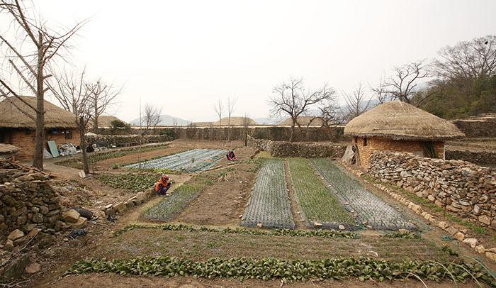 Naganeupseong - ngôi làng \'cây nấm\' ở phía nam Hàn Quốc