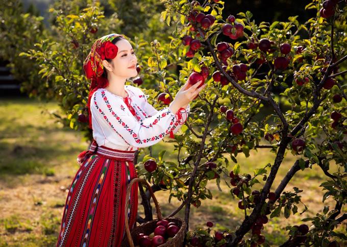 Cô tự tay thu hoạch những trái táo chín mọng trong vườn nhà người dân.