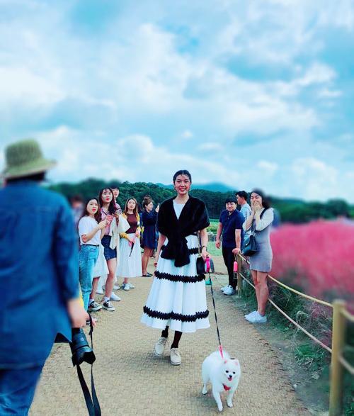 Loài cỏ hồng này có tên là muhly, là đặc sản của cố đô Gyeongju, nằm ngay cạnh chiêm tinh đài Cheomsenodae, nằm trong cụm di tích thời Silla. Hàng năm, loài cỏ này sẽ chuyển sắc hồng vào khoảng đầu tháng 10.