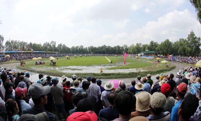 Sôi động lễ hội đua bò Bảy Núi An Giang