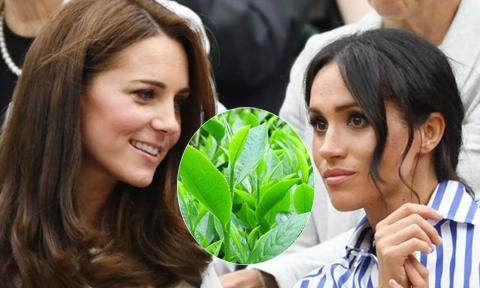 Kate từng khuyên Meghan uống nhiều trà để dễ thụ thai