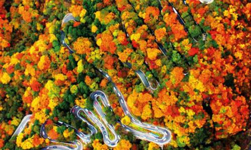 Bức tranh mùa thu nơi con đường nguy hiểm bậc nhất thế giới ở Nhật