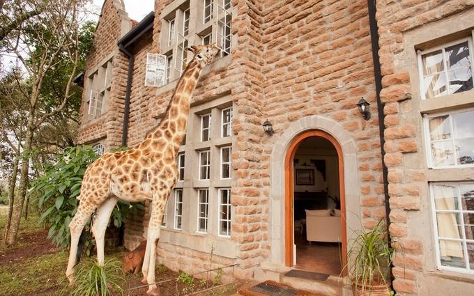 Khách sạn nơi du khách được đánh thức bởi hươu cao cổ