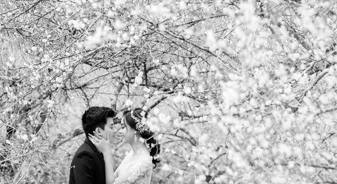 Ảnh cưới giữa rừng mơ của cặp \'ghét thì yêu thôi\'