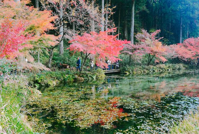 Hồ cá Koi đẹp như tranh Monet ở Nhật - 4