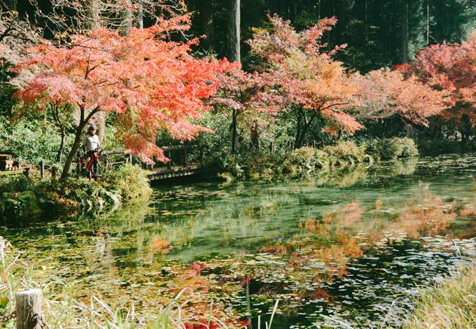 Hồ cá Koi đẹp như tranh Monet ở Nhật - 1