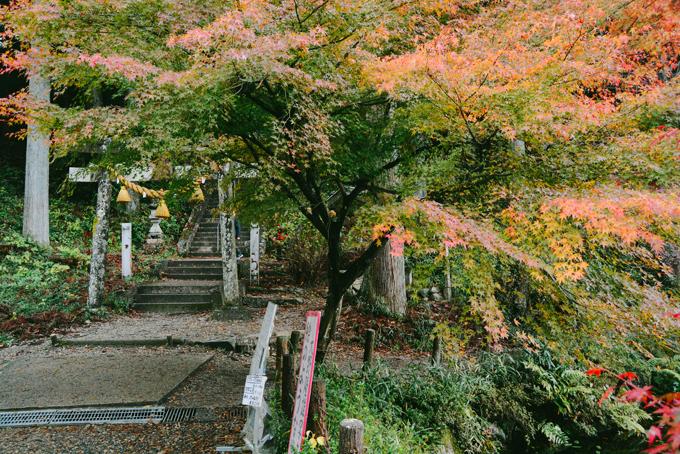 Hồ cá Koi đẹp như tranh Monet ở Nhật - 5