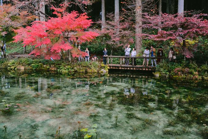 Hồ cá Koi đẹp như tranh Monet ở Nhật
