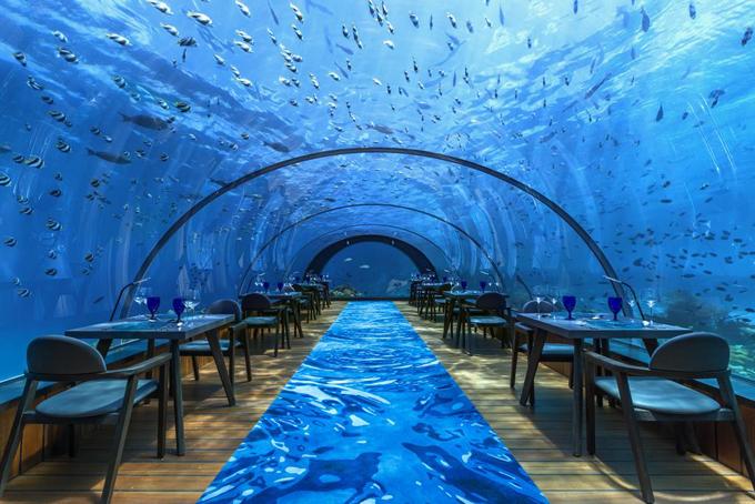 Đặc biệt, khu nghỉ này còn sở hữu một trong những nhà hàng thủy cung lớn nhất thế giới, nơi bạn có thể thưởng thức nhiều món ăn ngon với đàn cá cùng thủy sinh vật bơi xung quanh, đôi khi là cả những vị khách thân thiện đang bơi lặn muốn vẫy tay chào bạn.