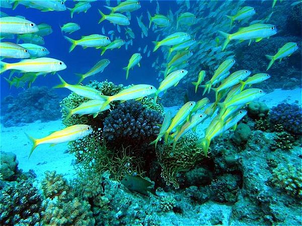 5 điểm đến hot nhất thế giới dành cho dân ưa lặn biển - 1