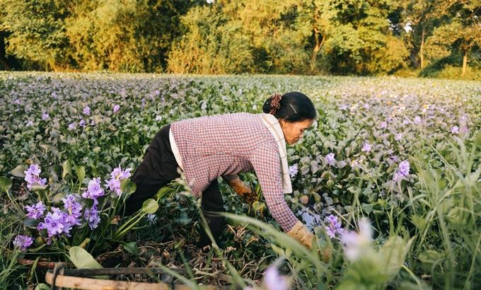 Người mẹ nông dân trong mắt con trai nhiếp ảnh gia - ảnh 2