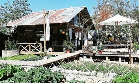 4 tiệm cà phê mang đến cảm giác hoài niệm ở Đà Lạt