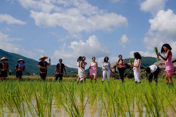 Tiểu Vy và các người đẹp Miss World xắn váy học cấy lúa - 3