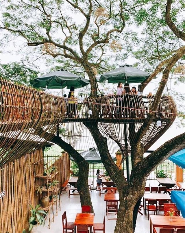 \'Sống ảo\' trong tiệm cafe trên cây ở Cần Thơ