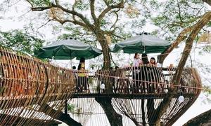 'Sống ảo' trong tiệm cafe trên cây ở Cần Thơ