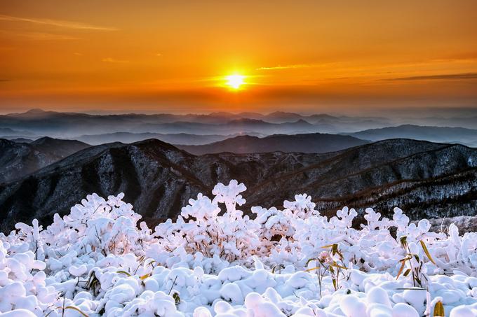 Khu rừng tuyết trắng như trong cổ tích ở Hàn Quốc - 10