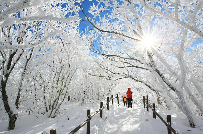 Nếu không thích mạo hiểm và tốc độ thì đi giữa khu rừng tuyết này cũng tuyệt vời không kém, nhất là khi Giáng sinh đang về.