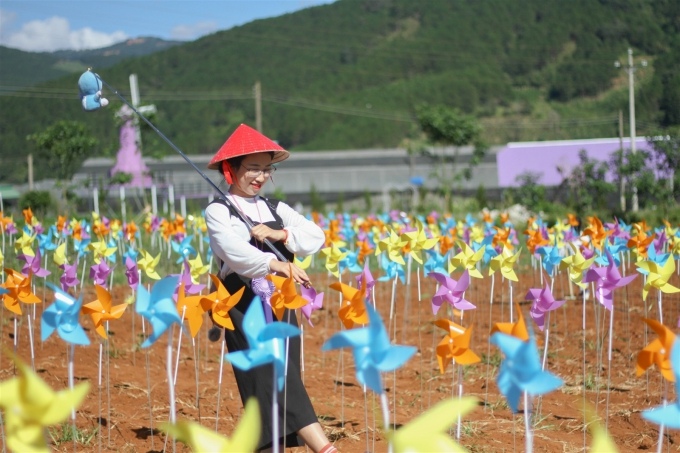 Cánh đồng chong chóng như phim sến Đài Loan ở Đà Lạt