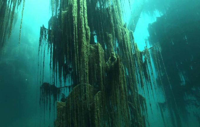 Hồ nước bí ẩn với loại cây mọc ngược dưới đáy - ảnh 3